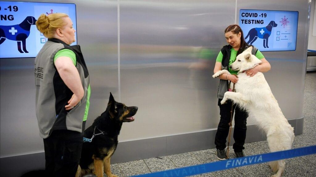 Nacho Sánchez Amor y Nicolás González Casares proponen a la Comisión Europea apoyar la investigación del uso de perros de trabajo para detectar la covid-19